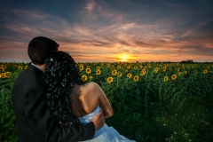 Sunflower Wedding Shot