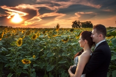 Sunset Wedding Image with Sunflowers