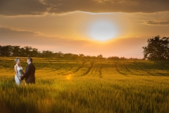 Wedding Photography in a Barley Field at Sunset